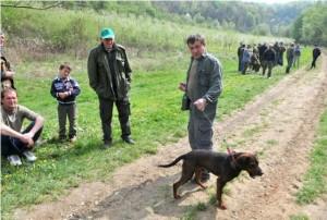 Natjecanje lovačkih pasa u Drenovcu 6.4.2014.
