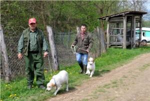 Natjecanje lovačkih pasa u Drenovcu 6.4.2014